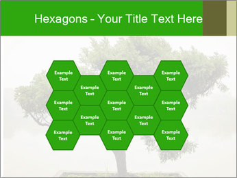 Chinese green bonsai tree PowerPoint Template - Slide 44