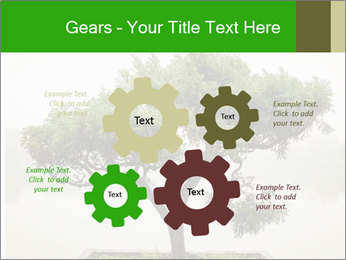 Chinese green bonsai tree PowerPoint Template - Slide 47
