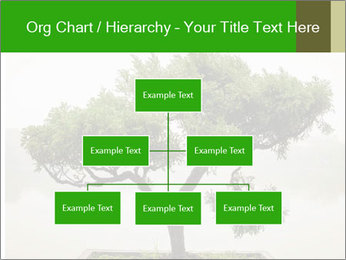 Chinese green bonsai tree PowerPoint Template - Slide 66