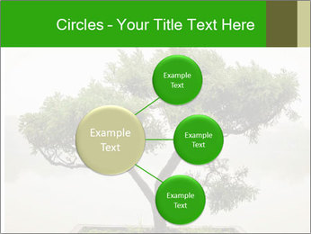 Chinese green bonsai tree PowerPoint Template - Slide 79
