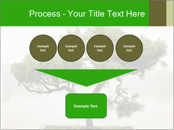 Chinese green bonsai tree PowerPoint Template - Slide 93