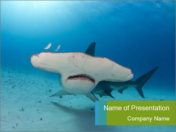 Shark in Bahamas PowerPoint Template