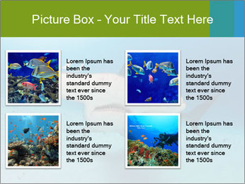 Shark in Bahamas PowerPoint Templates - Slide 14