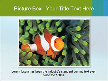 Shark in Bahamas PowerPoint Template - Slide 15