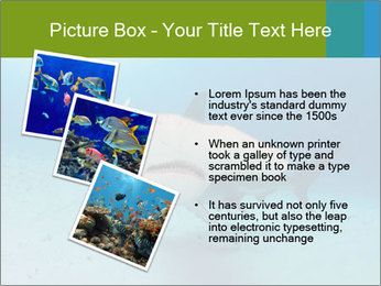 Shark in Bahamas PowerPoint Templates - Slide 17