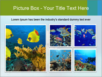 Shark in Bahamas PowerPoint Templates - Slide 19
