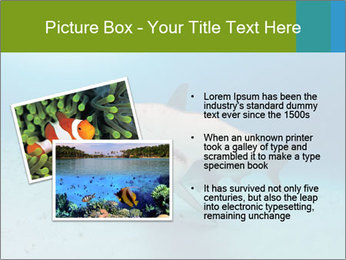 Shark in Bahamas PowerPoint Templates - Slide 20