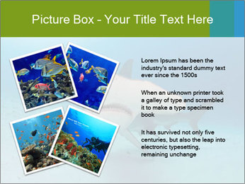 Shark in Bahamas PowerPoint Templates - Slide 23