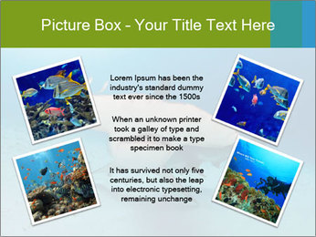 Shark in Bahamas PowerPoint Templates - Slide 24