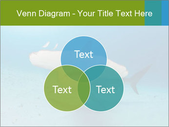 Shark in Bahamas PowerPoint Templates - Slide 33