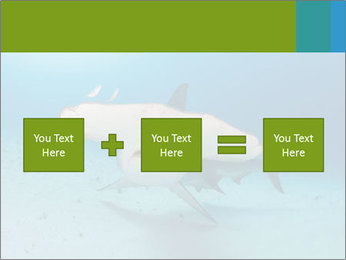 Shark in Bahamas PowerPoint Templates - Slide 95