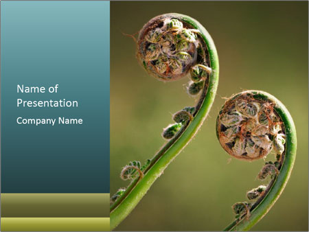 Two Green Fiddleheads On A Woodland PowerPoint Templates
