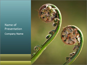 Two Green Fiddleheads On A Woodland PowerPoint Template