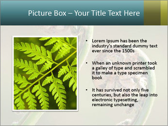 Two Green Fiddleheads On A Woodland PowerPoint Template - Slide 13