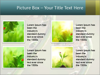 Two Green Fiddleheads On A Woodland PowerPoint Templates - Slide 14