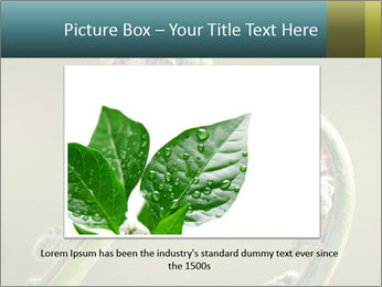 Two Green Fiddleheads On A Woodland PowerPoint Template - Slide 15