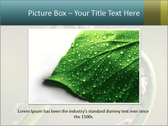 Two Green Fiddleheads On A Woodland PowerPoint Template - Slide 16