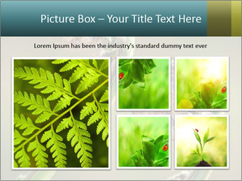 Two Green Fiddleheads On A Woodland PowerPoint Template - Slide 19