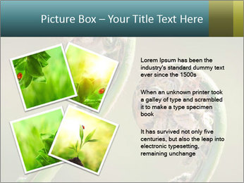 Two Green Fiddleheads On A Woodland PowerPoint Template - Slide 23