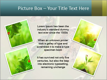 Two Green Fiddleheads On A Woodland PowerPoint Template - Slide 24