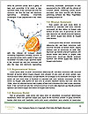 0000088242 Word Templates - Page 4