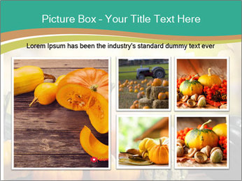 Assorted pumpkins and squashes on rustic wooden PowerPoint Templates - Slide 19