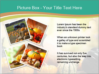Assorted pumpkins and squashes on rustic wooden PowerPoint Templates - Slide 23