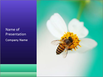 Bee on flower PowerPoint Template