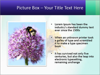 Bee on flower PowerPoint Template - Slide 13