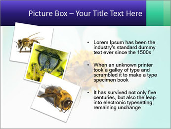 Bee on flower PowerPoint Template - Slide 17