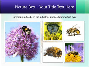 Bee on flower PowerPoint Template - Slide 19