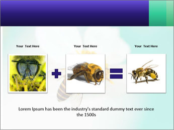 Bee on flower PowerPoint Template - Slide 22