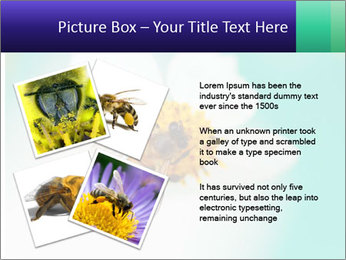 Bee on flower PowerPoint Template - Slide 23