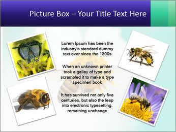 Bee on flower PowerPoint Template - Slide 24