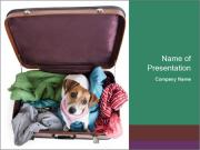 Cute dog sits in a suitcase for traveling with brightly PowerPoint Template
