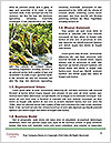 0000088282 Word Templates - Page 4