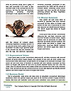 0000088300 Word Template - Page 4