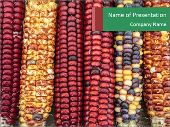 Indian colored corn PowerPoint Template