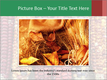 Indian colored corn PowerPoint Templates - Slide 15