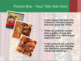 Indian colored corn PowerPoint Templates - Slide 17