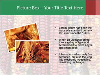 Indian colored corn PowerPoint Templates - Slide 20