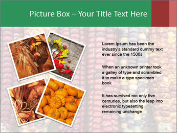 Indian colored corn PowerPoint Templates - Slide 23