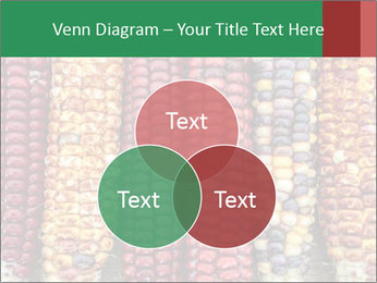 Indian colored corn PowerPoint Templates - Slide 33