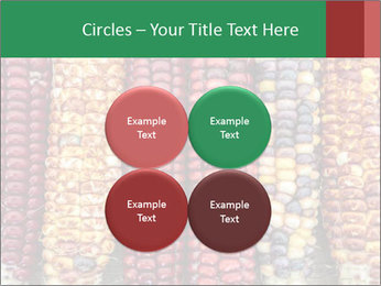 Indian colored corn PowerPoint Templates - Slide 38