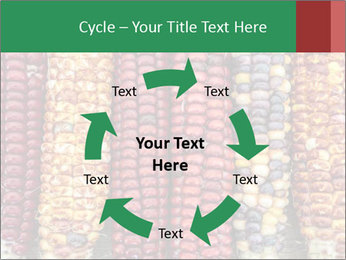Indian colored corn PowerPoint Templates - Slide 62