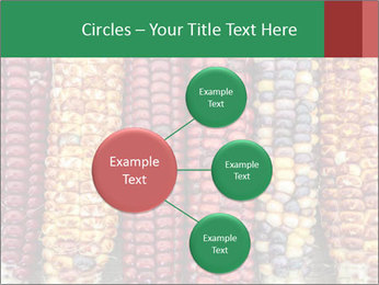 Indian colored corn PowerPoint Templates - Slide 79