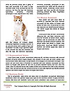 0000088325 Word Templates - Page 4