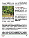 0000088326 Word Template - Page 4