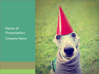 A cute dog in a local park with a birthday PowerPoint Template