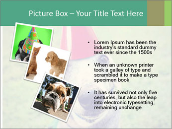 A cute dog in a local park with a birthday PowerPoint Templates - Slide 17